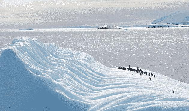 penguins iceberg antarctica