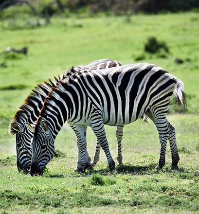 Une faune spectaculaire