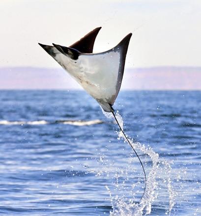 Découvrir la faune marine dense de l'île de Pemba - Tanzanie