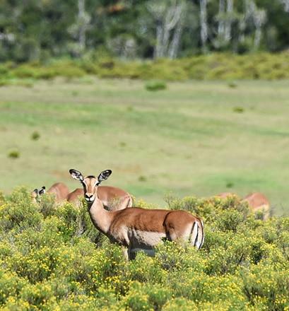 Partir en safari dans le parc Kruger - Afrique du Sud