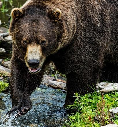 Beobachten Sie die wilde Tierwelt an Land