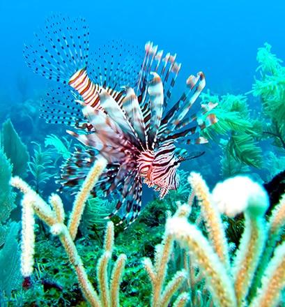 Communier avec la nature, terrestre ou sous-marine
