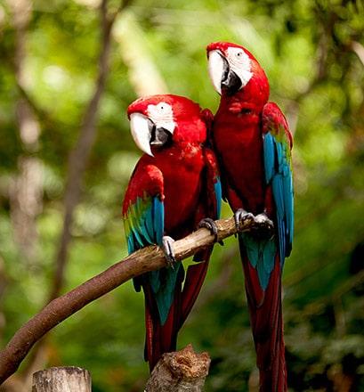Les jardins de Pura Vida - Costa Rica