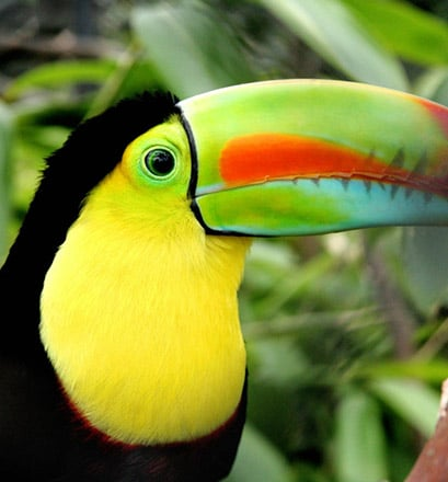 Observer une faune incroyablement riche