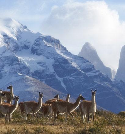 Visiter le parc national Torres del Paine - Chili