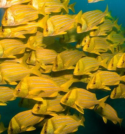 Plonger en mer de Cortez - Mexique