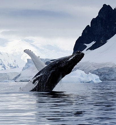 Croiser une faune marine majestueuse