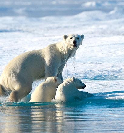 Partir sur les traces des ours polaires au Spitzberg