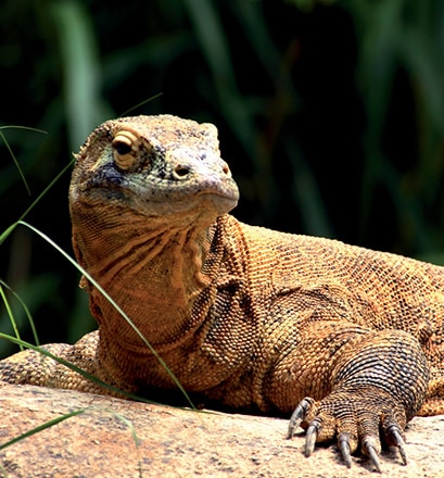Besuch im Komodo-Nationalpark – Indonesien