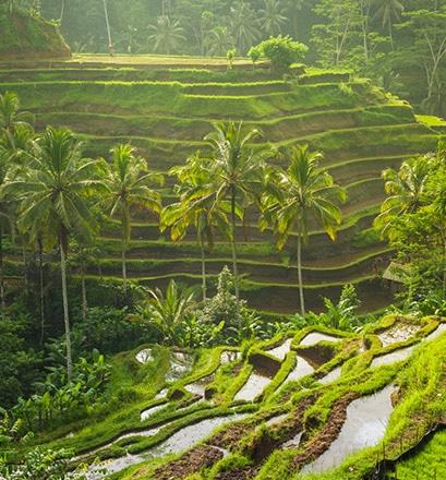 Se promener dans les rizières en terrasses de Bali - Indonésie