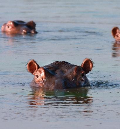 Découvrir une faune exceptionnelle – Bijagos