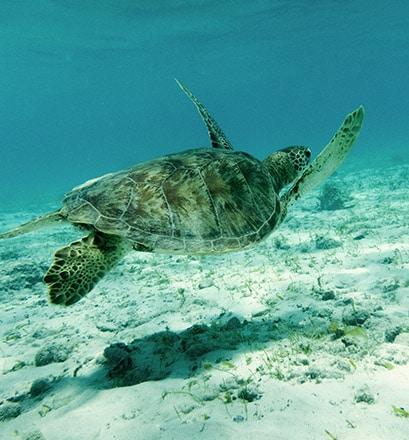 Pour découvrir des fonds marins exceptionnels