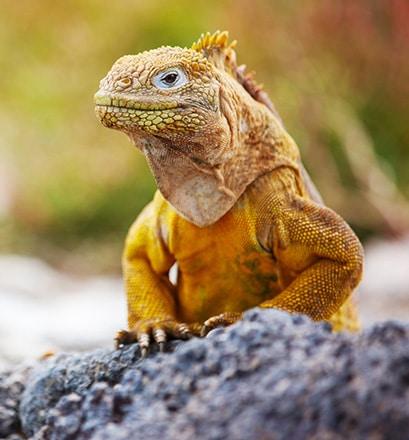 Discover the wildlife of the Galápagos Islands, Ecuador
