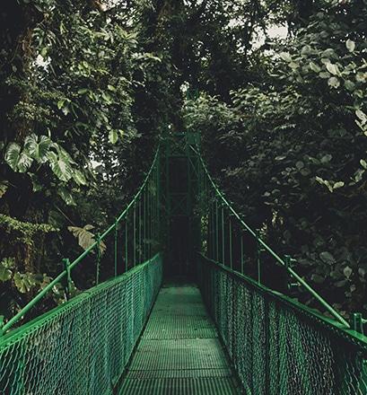 La canopée - région Nord, Costa Rica