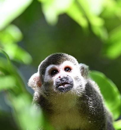 Réserve naturelle de Curú - péninsule de Nicoya, Costa Rica