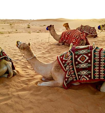 Visiter un village bédouin - Émirats arabes unis