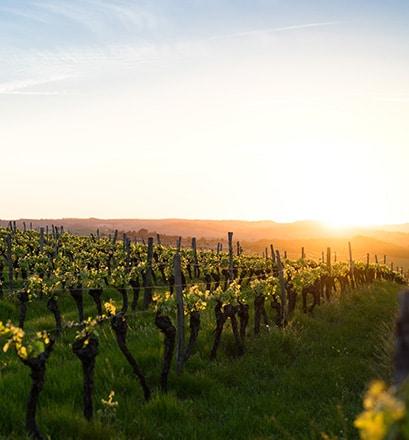 Stroll around the Pauillac vineyards