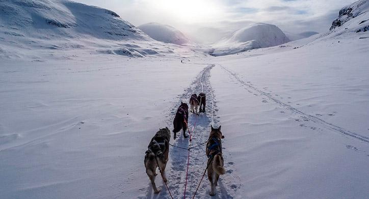 Les Incontournables du Groenland