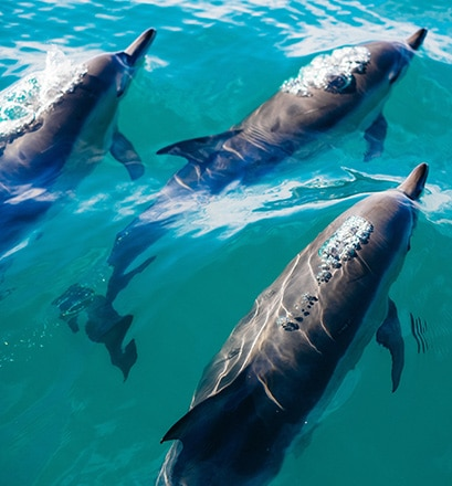 Observer les baleines et les dauphins