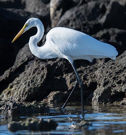 Des sites naturels classés Unesco - Mer de Cortez