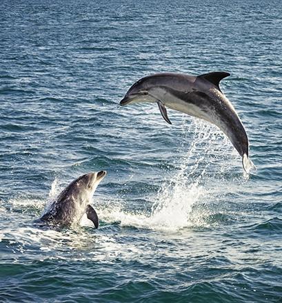 Observer les baleines et les dauphins à Madère