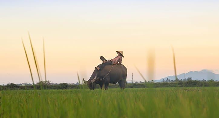Vietnam - Essential guide