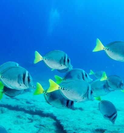 Plonger dans un aquarium naturel - Mer de Cortez, Mexique