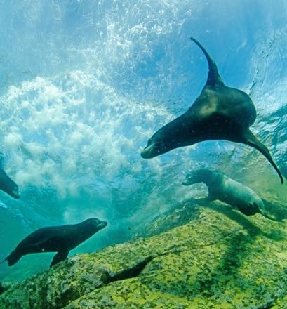 Nager avec les lions de mer - Los Islotes, Mexique