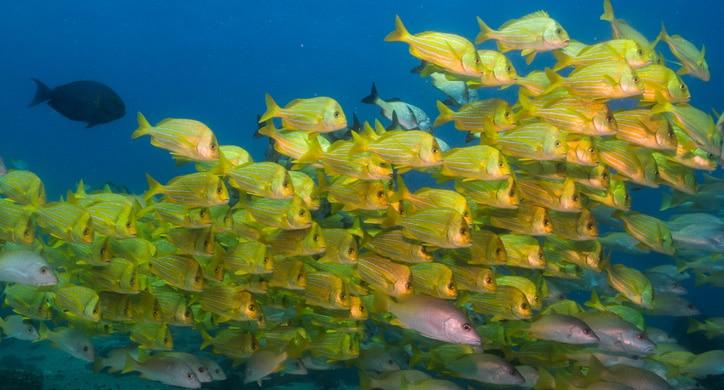 L'Essentiel de la Mer de Cortez