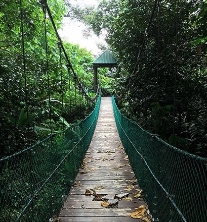 Venture into the Taman Negara rainforest - Malaysia