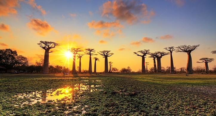 L'Essentiel de Madagascar