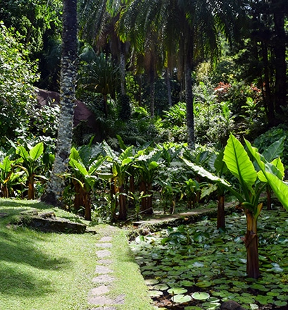 Walk around the Victoria Botanical Gardens - Mahé