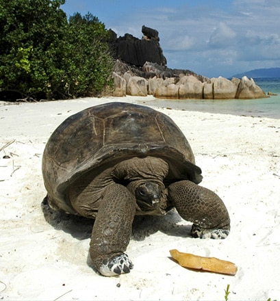 Spend a day with giant tortoises - Curieuse