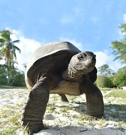 Découvrir un paradis sauvage - Atoll d'Aldabra