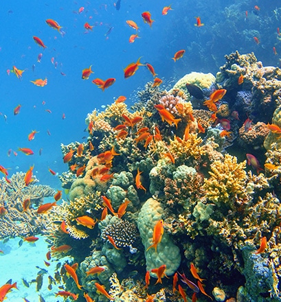 Dive to see the most beautiful coral - Alphonse