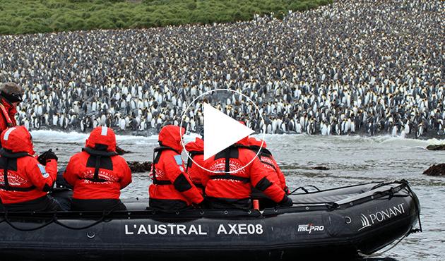 penguins subantarctic islands