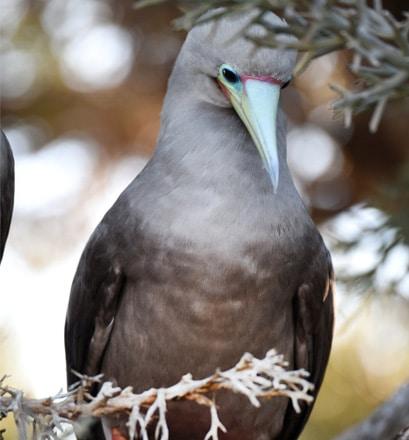 A stunning seabird site