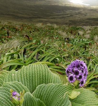 Lush and abundant endemic flora