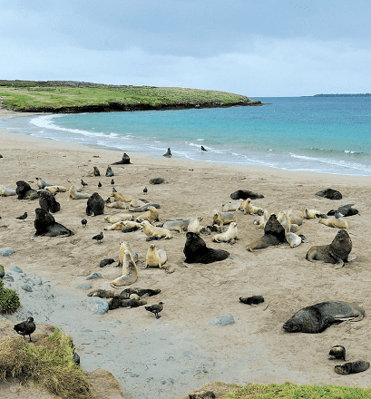 Breeding colonies of marine mammals